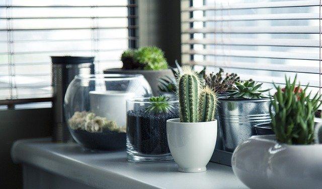 Comprare piante online